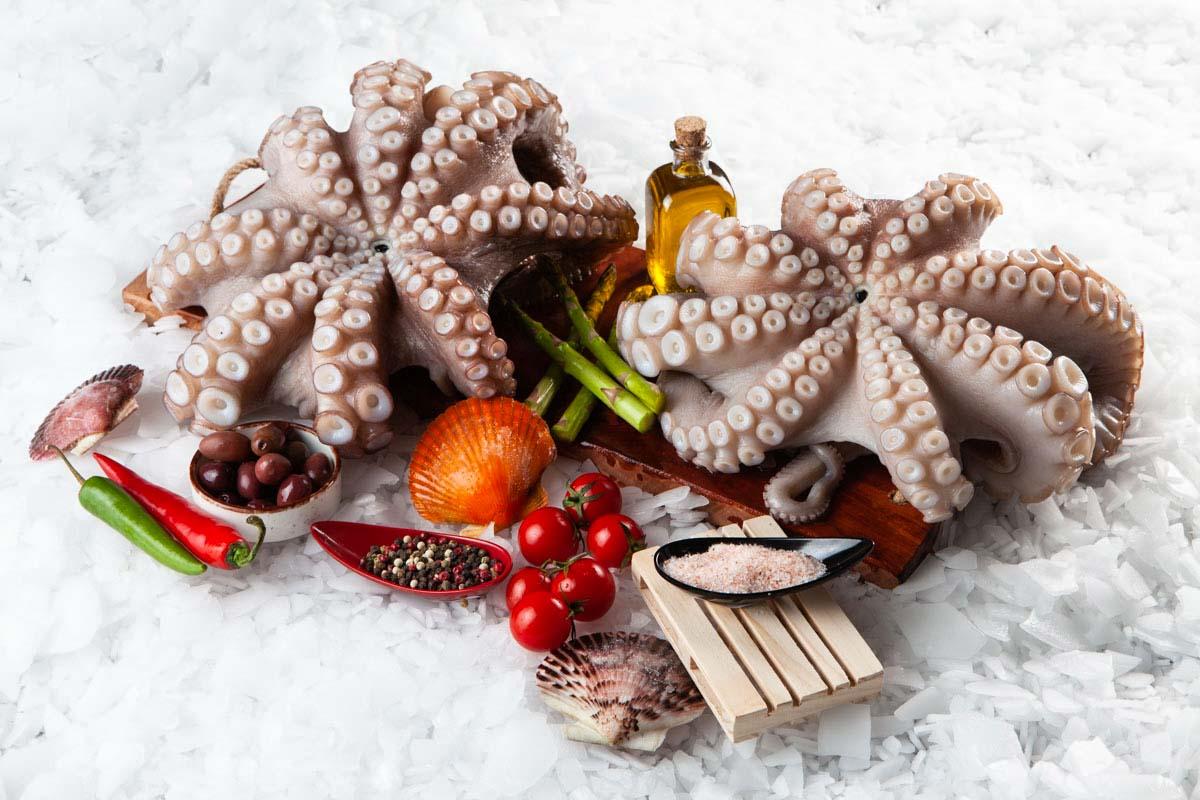 Super Fish Χταπόδι / octopus vulgaris